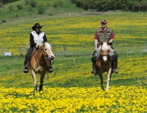paardrijden-sauerland